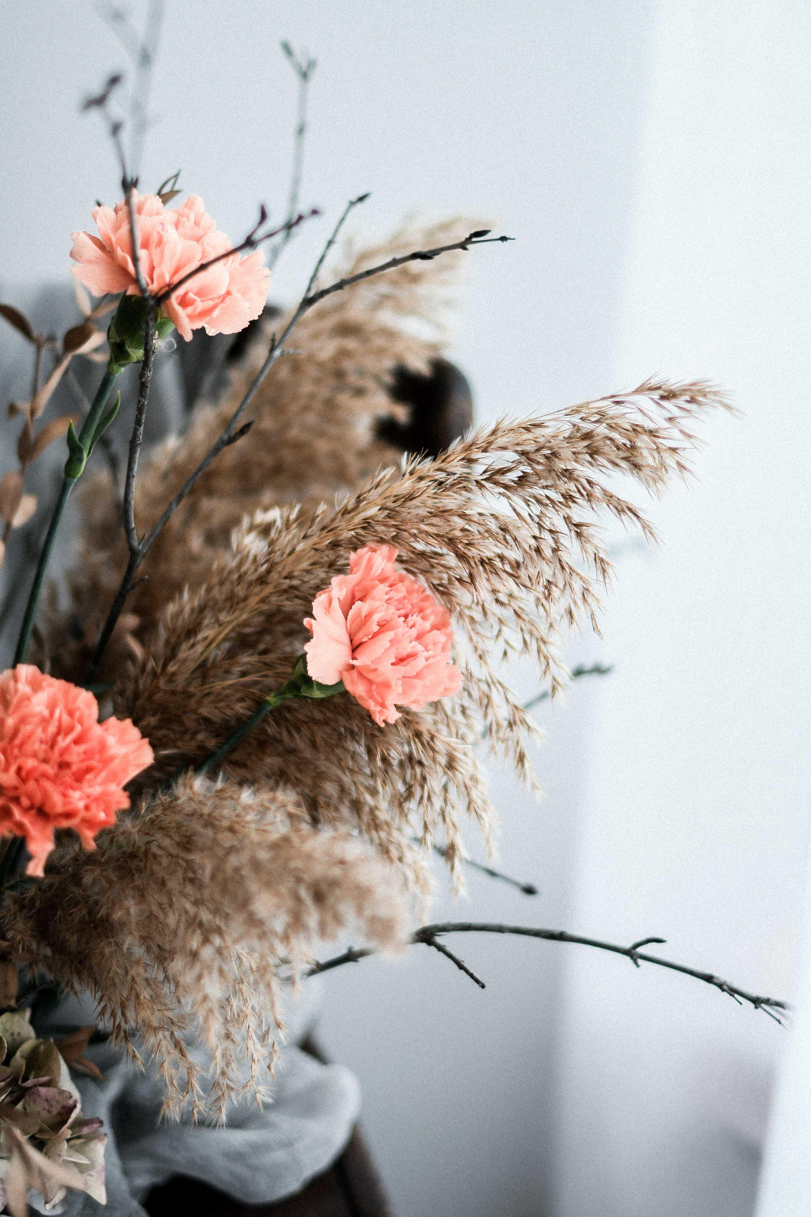 floral carnation dianthus bouquet photography