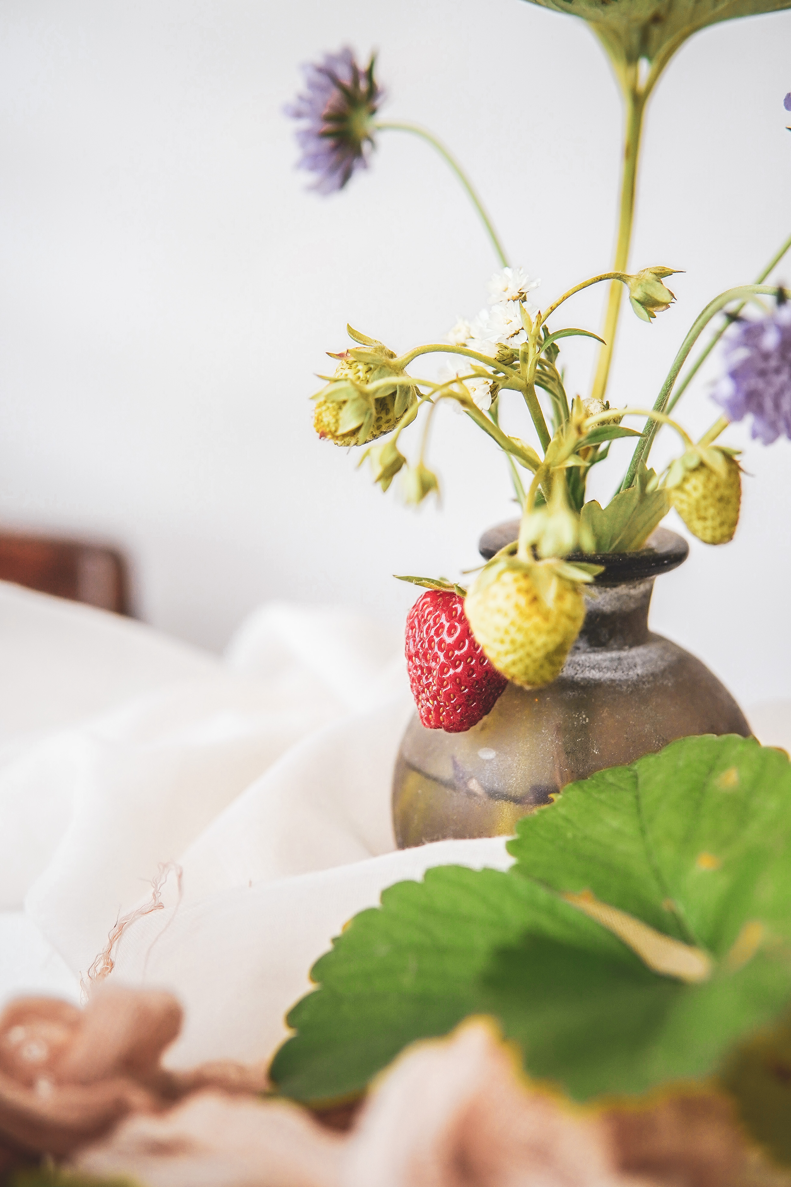 strawberries photography